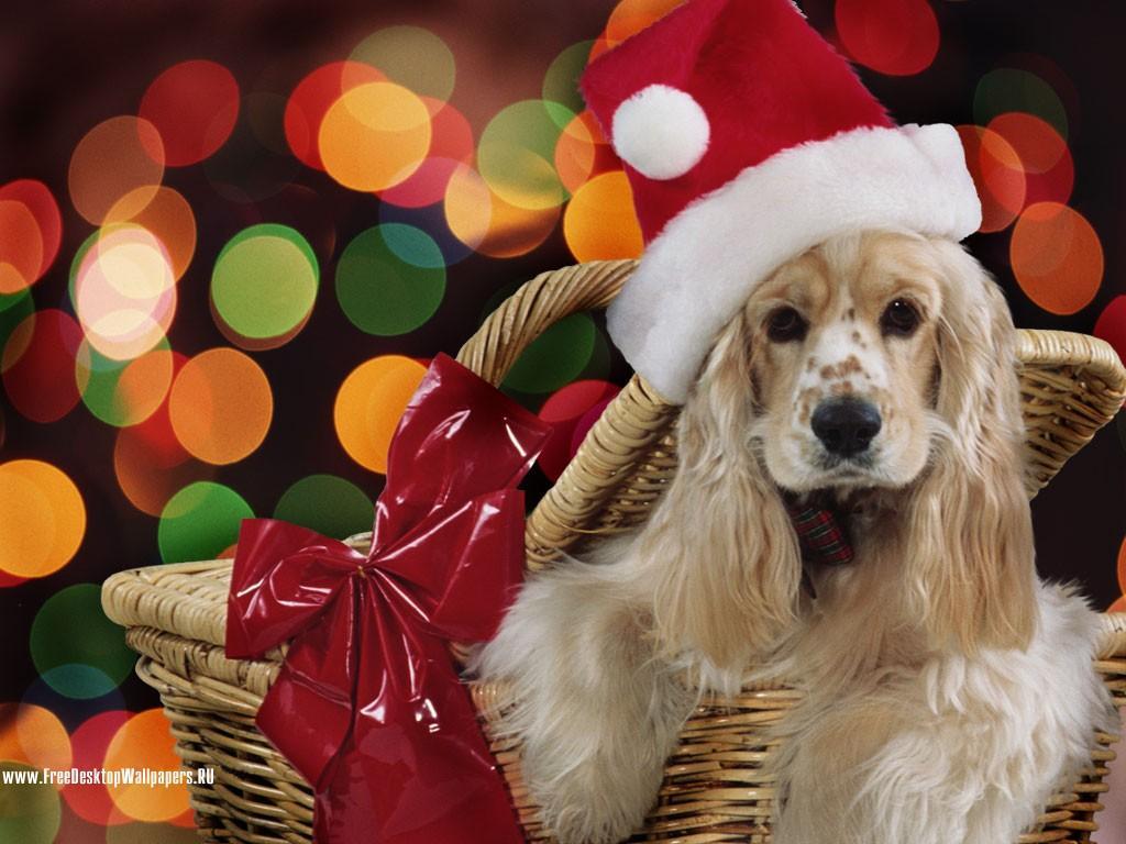 Темы с животными на новый год